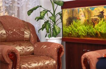 Aquariums Everything For The Aquarium Hobbyist