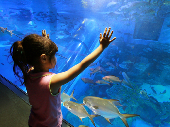 Public Aquariums Best And Biggest In The World